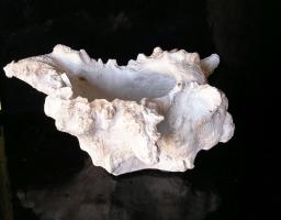 Mořská mušle dekorace z kameniny, bytové dekorace